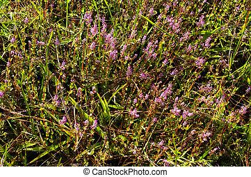 pink flower field on ground