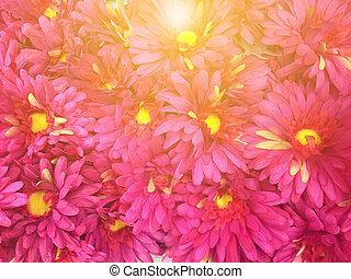 Pink flower field under sunlight