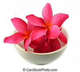 Pink flower in cup isolated / Red Frangipani Plumeria on white background