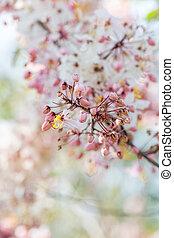 Pink flower in garden. Nature background