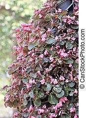 Pink flower in jardiniere.