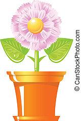 Pink flower in pot.