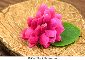 Pink flower in spa - Closeup of beautiful pink flower...