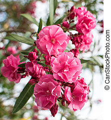 Pink Flower in Tree