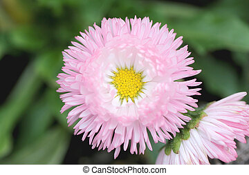 Pink flower is blooming.
