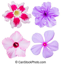 pink flower isolated