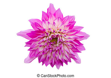 Pink flower isolated on white background with clipping path by Macro lens .