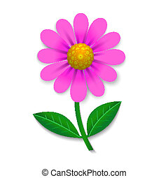 Pink flower isolated on white, design element, vector