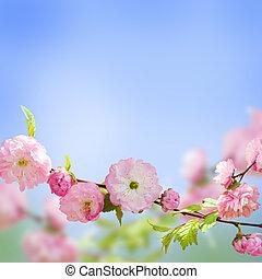 Pink flower of an Oriental cherry in a spring garden