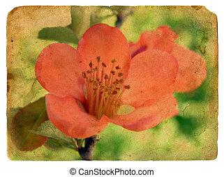 pink flower. Old postcard