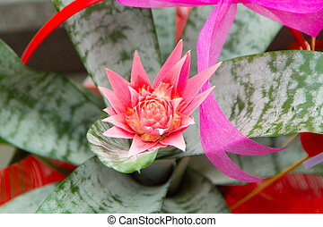 Pink flower on a green cactus