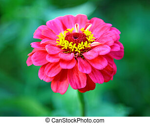 Pink flower on green background