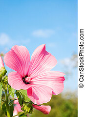 Pink flower on the sky background