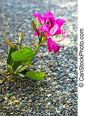 Pink flower on the stone floor.