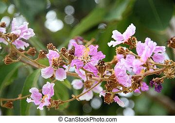 pink flower on tree.