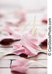Pink flower petals on table
