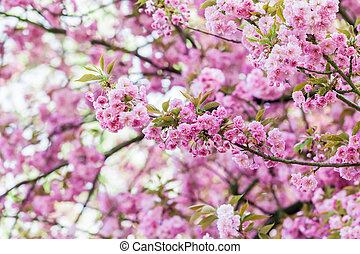 pink flower.  spring background