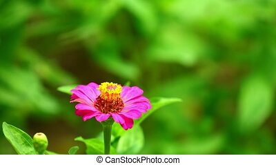 Pink flower with vibrant green foliage background, bright sunlit intimate close up garden scene.