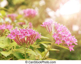 pink flower under sunlight in morning