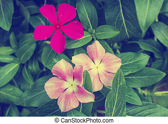 pink flower with background green leaf in nature