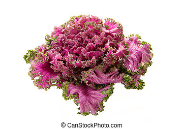 Pink Flowering Kale - Fresh organic pink flowering kale on ...