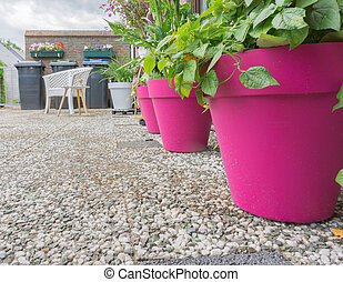 pink flowerpots with plants in the garden decorative
