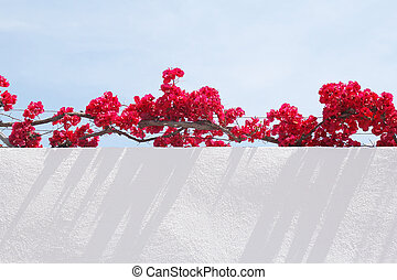 pink flowers and white wall