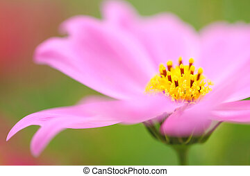 pink flowers blossoming in spring
