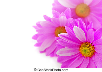 Pink flowers - Floral background of pink flowers close up on...