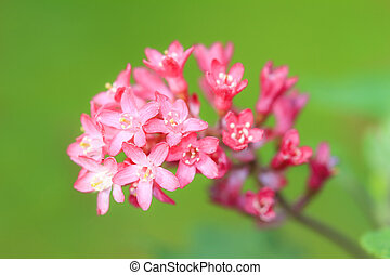 Pink flowers green background
