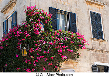 Pink flowers hanging on a house