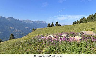 pink flowers in a meadow on alpine mountain under blue sky