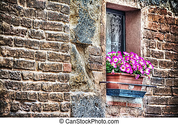 pink flowers in a rustic window sill in Florence