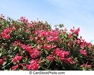 pink flowers in a tree