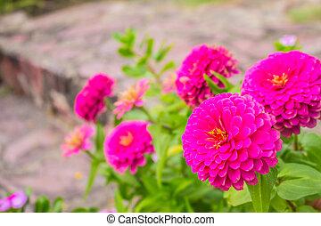 Pink flowers in garden.