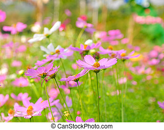 Pink flowers in green garden