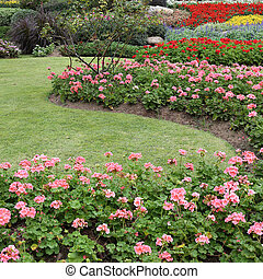 pink flowers in green grass garden