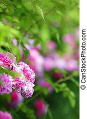 pink flowers in green park garden, nature background