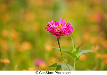 Pink flowers in spring background