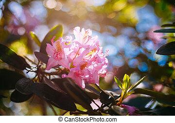 pink Flowers In Spring Garden Tree