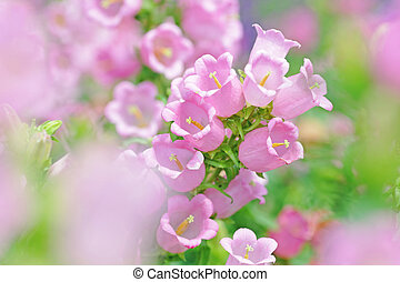 pink flowers in spring time