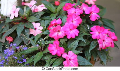 pink flowers in the forest