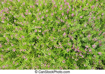 Pink flowers in the garden background
