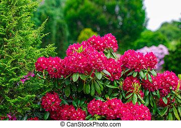 Pink flowers in the garden. Summer background