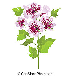Pink flowers mallow with green leaves, isolated on white background. Vector illustration