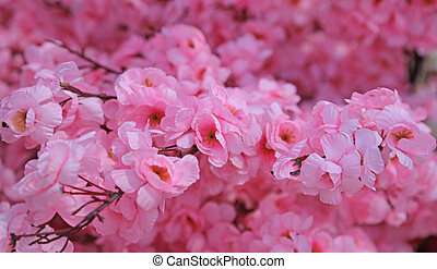 pink flowers of a peach tree in spring