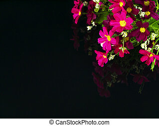 Pink flowers on a black background with reflection.