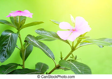 Pink flowers on a blue background
