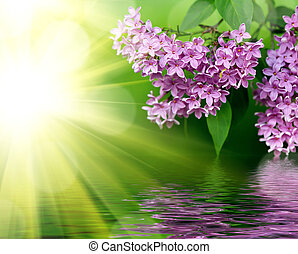 Pink flowers on a green background