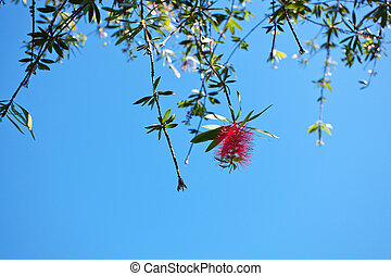 pink flowers on a green tree on sky background
